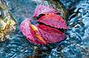 Herbstblatt auf dem Wasser | Stock Foto