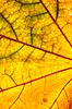 Herbstblattbeschaffenheit | Stock Foto