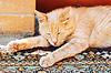 Lazy gato rojo está durmiendo estiró las piernas | Foto de stock