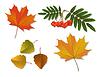 Векторный клипарт: Набор осенних листьев
