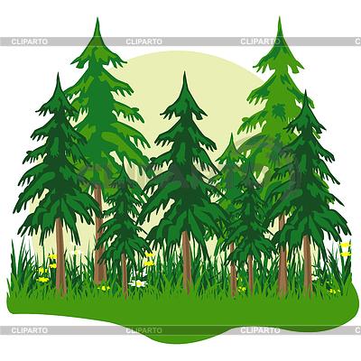 Лес хвойный рисунок