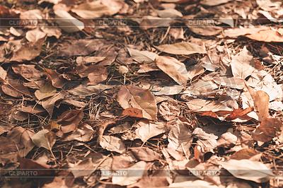 Herbstblätter | Foto mit hoher Auflösung |ID 4595279