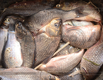 Viel o Fisch lesbisch