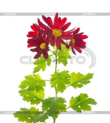 Рука держит цветок фото