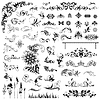 Vector clipart: Set of vector floral elements