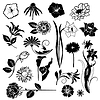Vector clipart: Set of vectors flowers